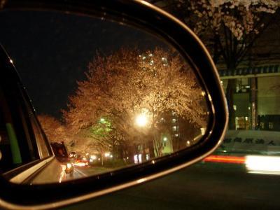 相模原の桜 − 2006