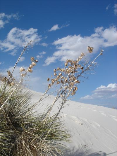 White Sands (1) 04/01/06