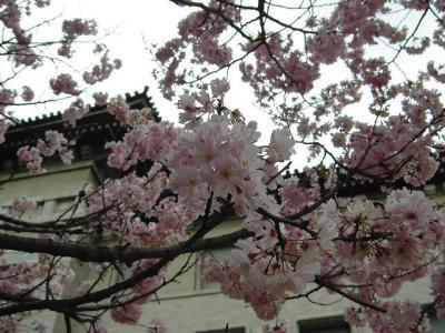 上野~本郷、花酔い散歩