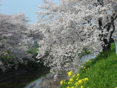 猫熊堂の、唐沢堀の桜・2006 <埼玉県深谷市・07/APR/06>