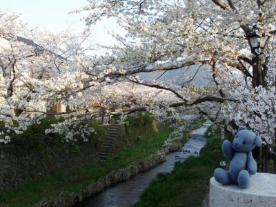 桜咲く山口散策