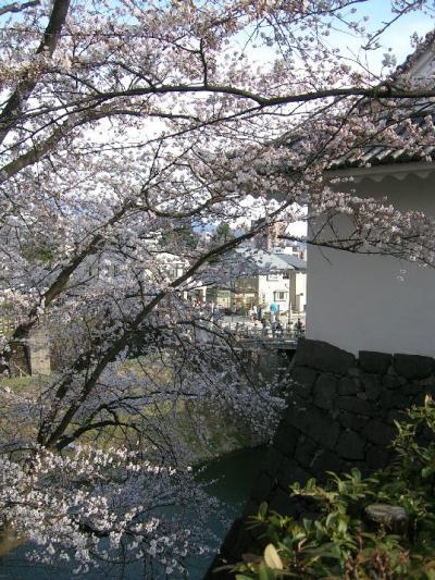 霞城公園の桜♪