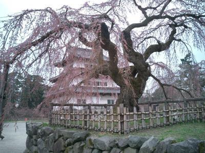 弘前、角館、北上展勝地の桜