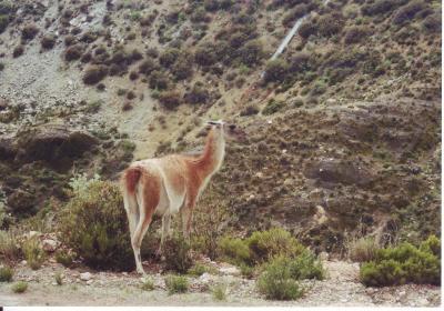 【チリ】 卒業旅行、南米の自然は大迫力