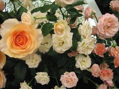 国際バラとガーデニングショウへやってきました!! Vol.1(バラの花+α編)