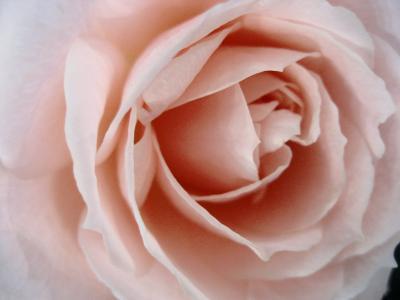 国際バラとガーデニングショウに行ってきました!その3:思いっきり薔薇づくし