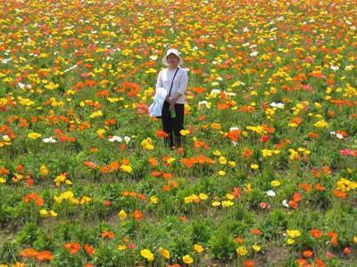 フラワーヒル菊池高原