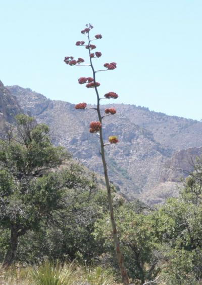グアダルペ山脈国立公園(Guadalupe Mountains National Park)