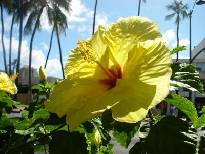 初☆ハワイ6日間の旅