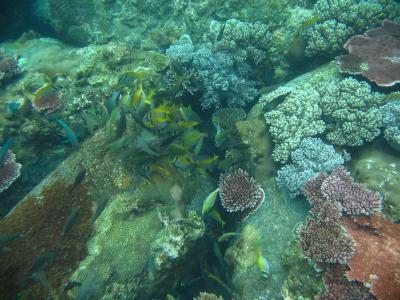 マレーシア・ティオマン島ダイビング