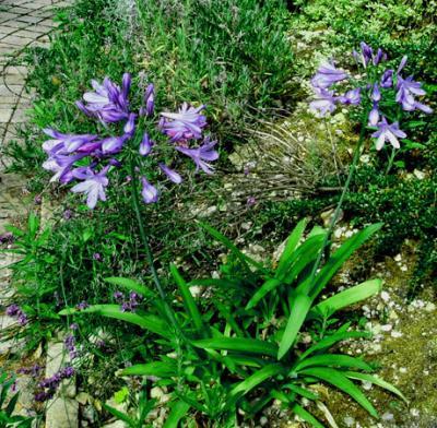 6月の庭の花(up date版)