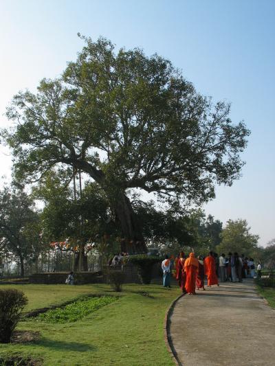 インド仏跡参拝と世界遺産の旅?【祇園精舎・カピラ城】