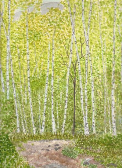 秋神白樺原生林