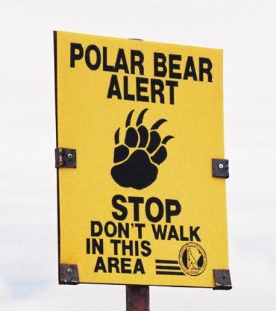 """憧れの国カナダへ 初の海外一人旅 (1)Did you watch """"POLAR BEAR""""?"""