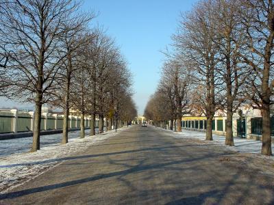オーストリア: ウィーン クリスマスの「シェーンブルン宮殿」