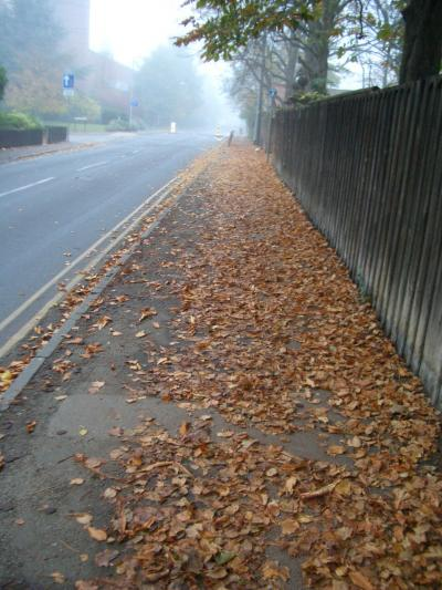 Life in Cambridge (Part 2: November 2004)