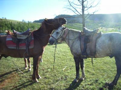 モンゴル旅行・1日目 -草原で馬とたわむれる-