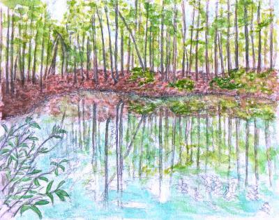 水・空・若葉---美人林