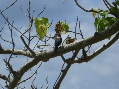 ロタ島でみた動物や植物