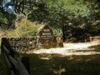 ミュアウッド国定公園観光とアウトレットショッピングの旅