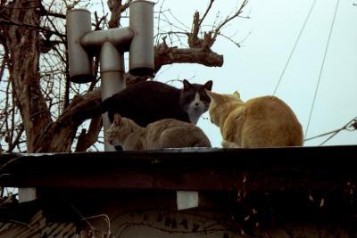 日本の猫−甲府