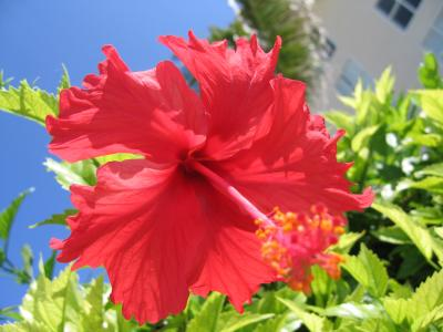 夏休み in Cancun