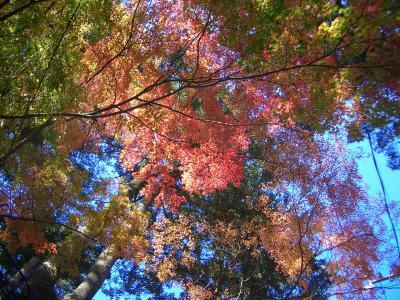 初秋の軽井沢