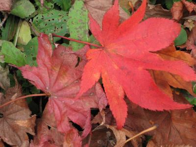 紅葉、真っ盛り!