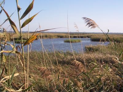 エブロ川の三角州、自然保護地区、南カタルーニャ