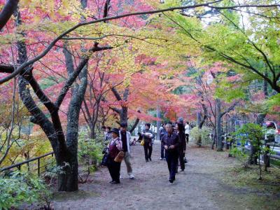 奥津温泉の紅葉