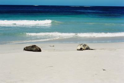 カンガルー島