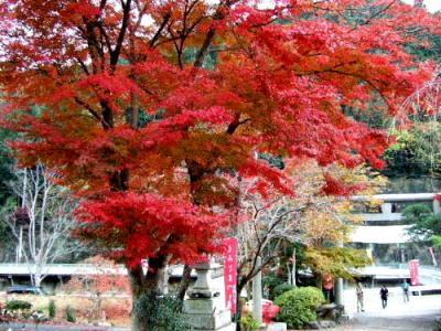 もみじの美しい東郷公園