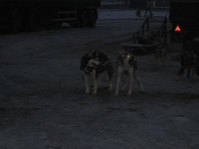 北欧の旅 サーリセルカへ 2006冬紀行(Husky Safari Tour)