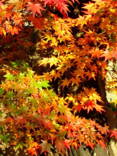 京都のお散歩~深草 若冲の石仏と紅葉をたずねて
