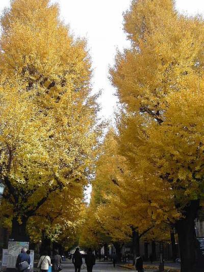 銀杏の葉っぱをカサコソ踏みしめて東大構内♪