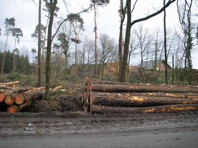 北ドイツの森の間伐