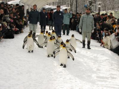 2007.01.02旭山動物園-その1(出発~ペンギンのお散歩)