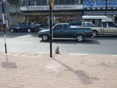 ロッブリー サルを見に。