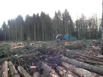 北ドイツ 森林伐採 2
