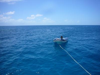 ケアンズ−ジャングルと青い海へ 2)グレート・バリア・リーフ