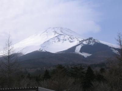 富士山へ植林です。木を植えに行ってきました♪