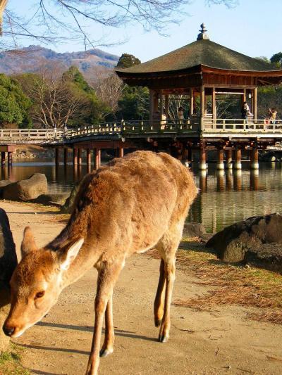 そろそろ 奈良へ? ~鹿さんと遊ぶ ゆったり奈良公園~