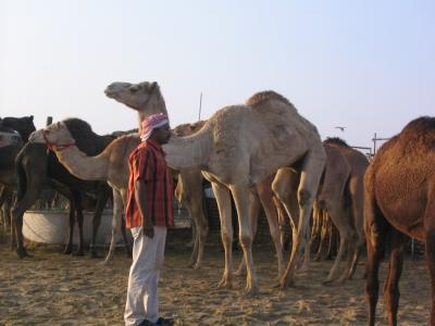 ドーハ市内観光その1(エジプト旅行1日目)
