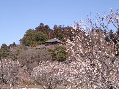 水戸偕楽園の梅祭りに行ってきました