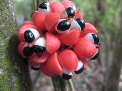 イキトス~奇妙な動植物
