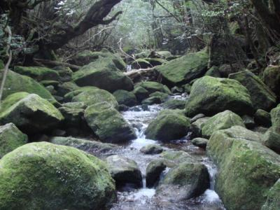 屋久島 白谷雲水峡 トレッキング