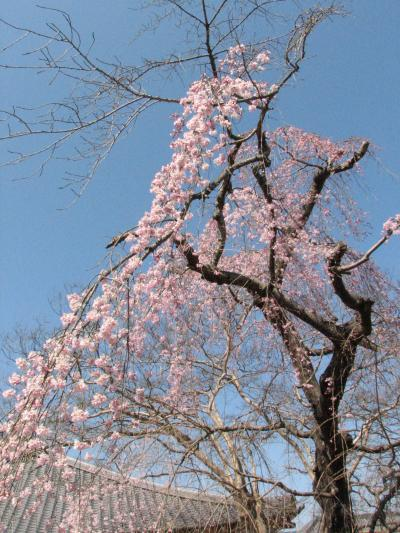2007.03.23 ドライブ'(その1:小川町西光寺から仙元山)
