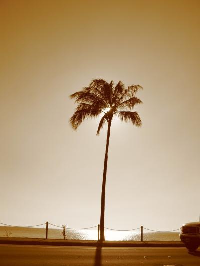 オアフの海とヤシの木と