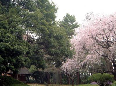 オルセー美術館展と東京国立博物館の庭園