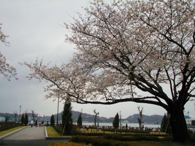 横須賀~衣笠山の桜と港の景色